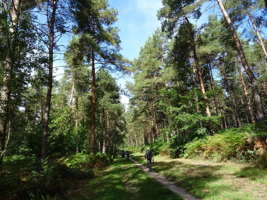 2018 09 16 forêt de Laigues_06