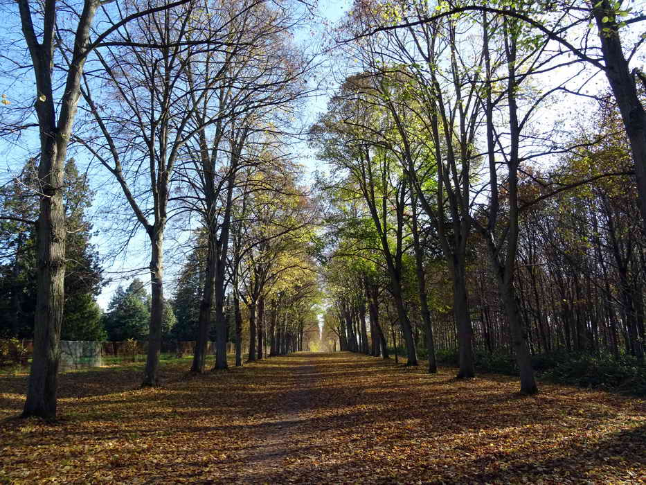 2018 11 18 Versailles - Marly _19