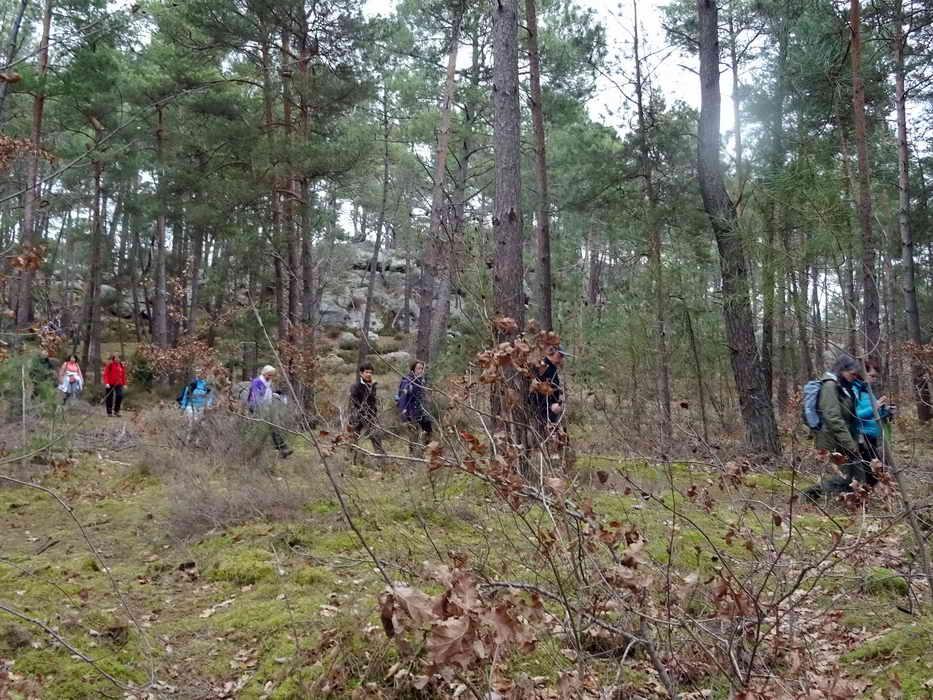 Forêt commanderie Larchant