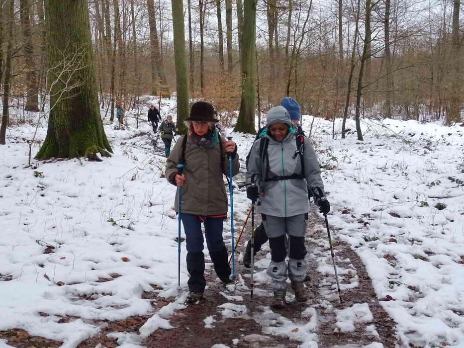forêt d'Halatte_3