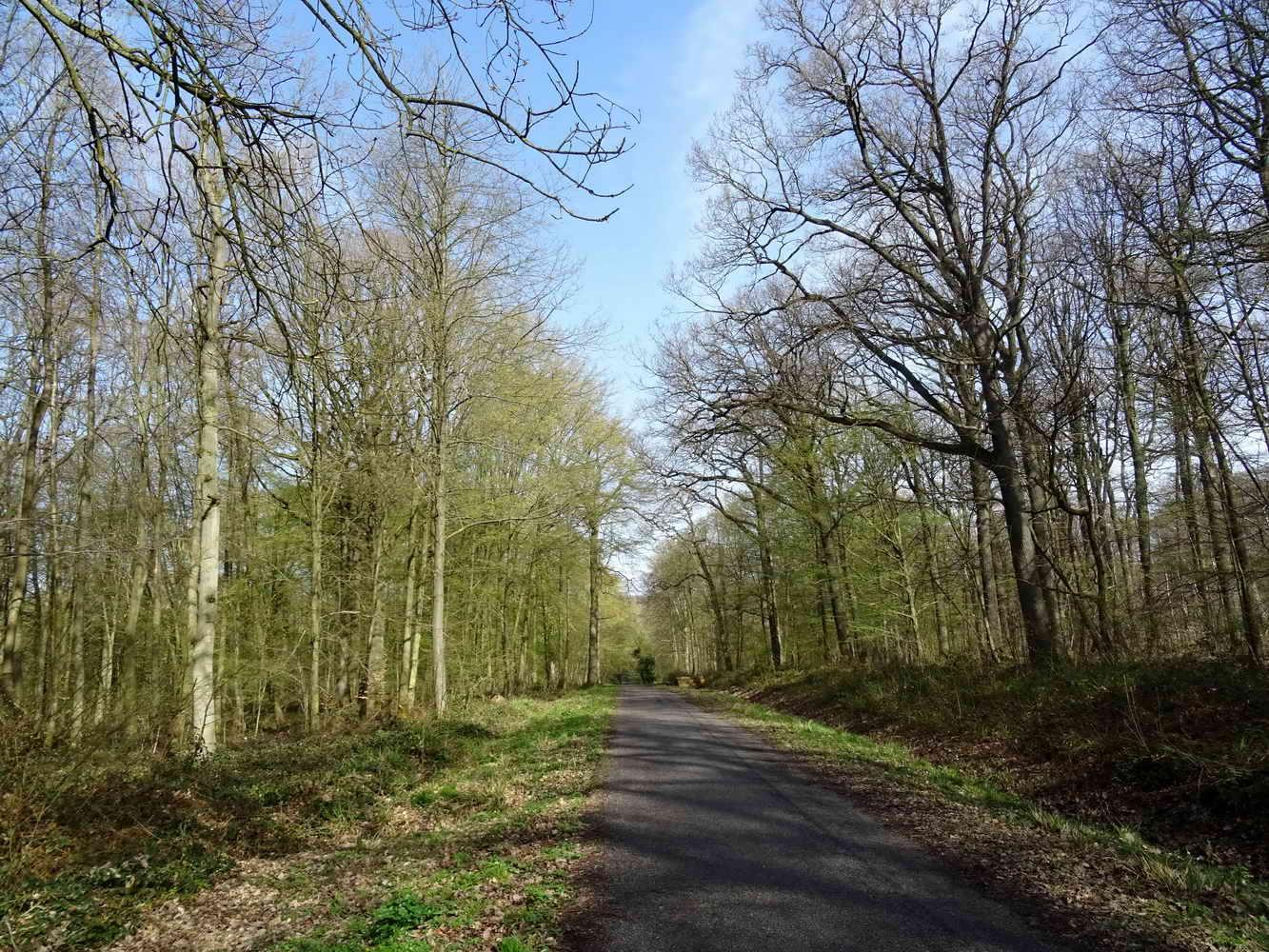 rando en forêt de Carnelle avril 2018