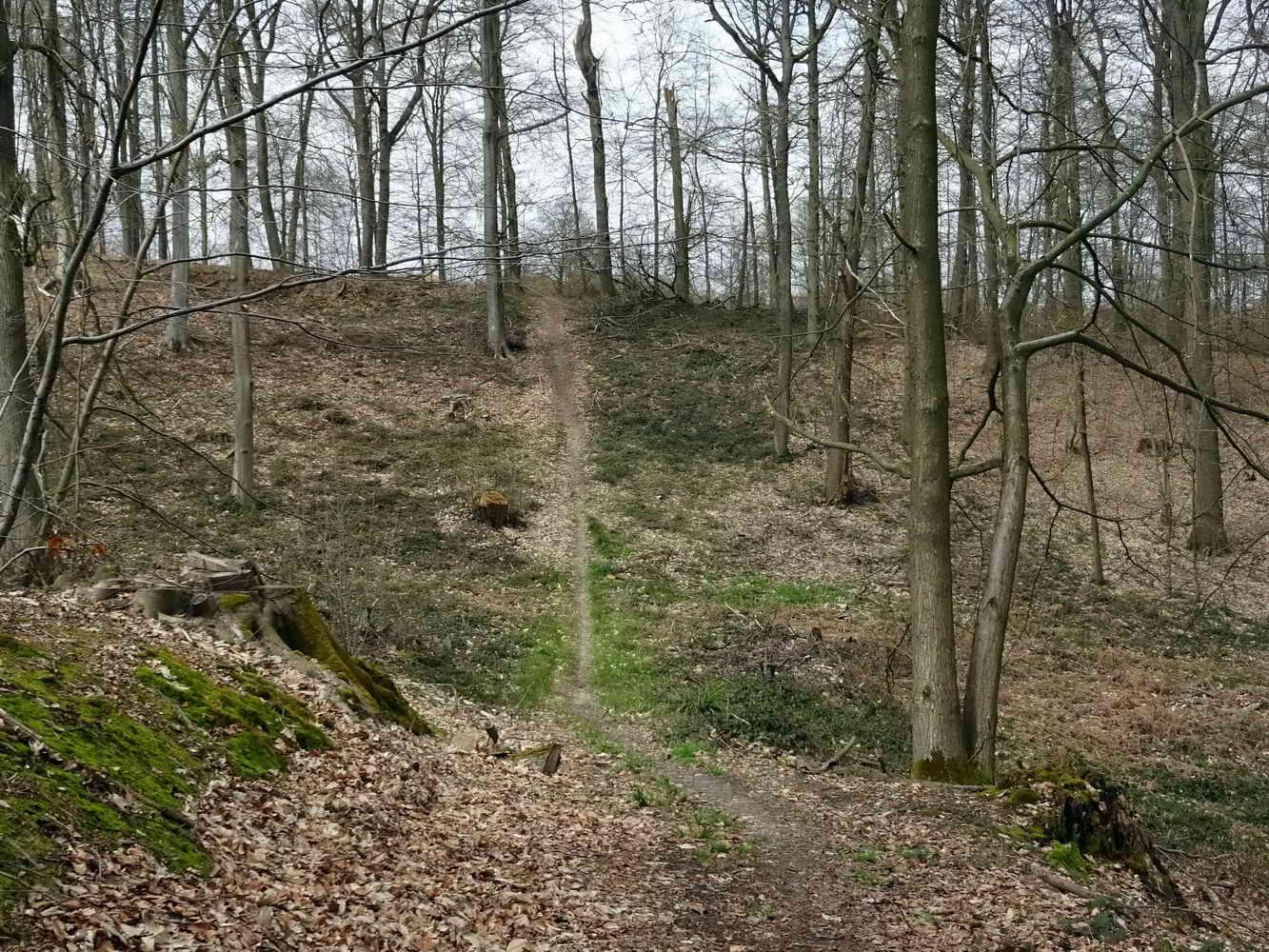 forêt de Carnelle_07
