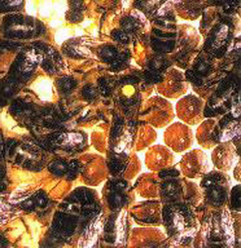 musée vivant de l'apiculture _1
