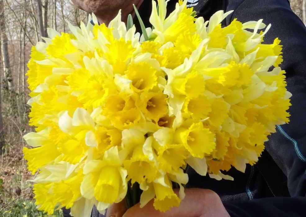 Bouquet jonquilles redimensionner 1
